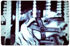 merry-go-round-horse