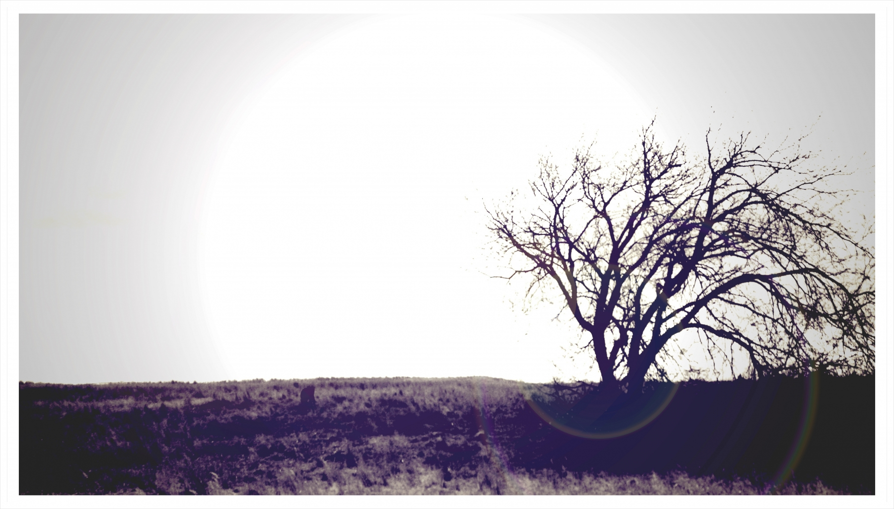 black-lone-tree-cloudy-sky-sepia-lens-flair