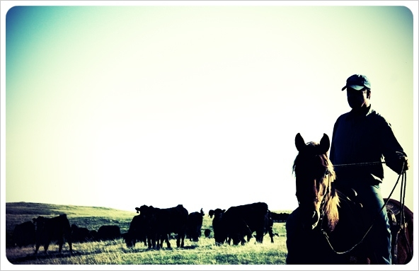 bruce-silhouette-cattle-drive