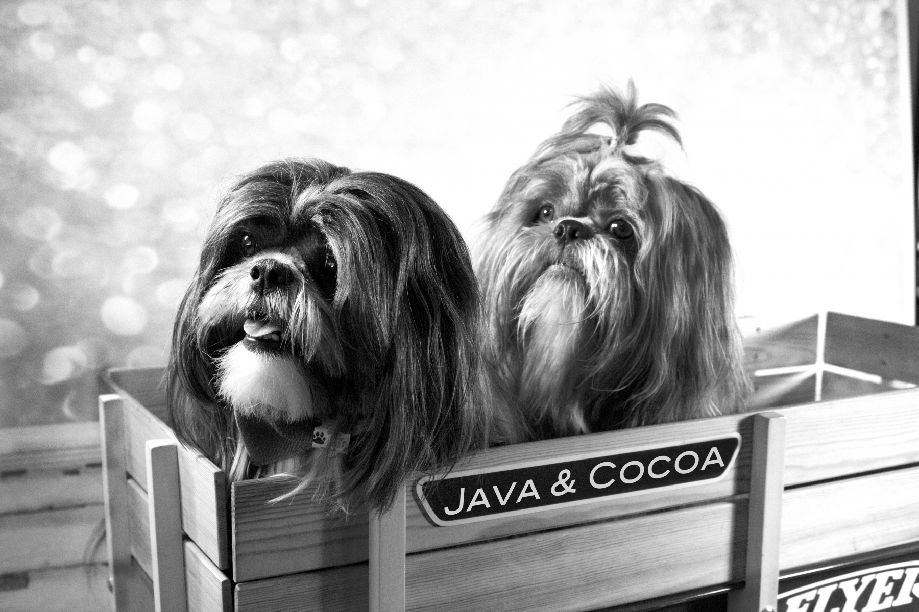 Java & Cocoa – Pet Photos